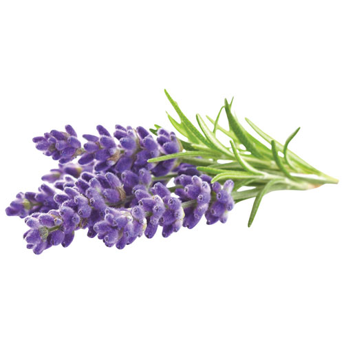 Lavender Flavor Pourfectionflavor Pourfection